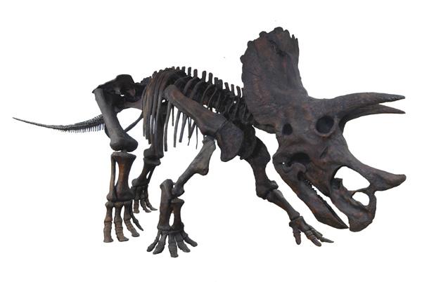トリケラトプスの画像 p1_37