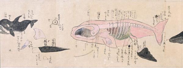 セミクジラの画像 p1_3